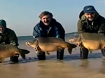 Aan Taylor and Kevin Maddocks Catch Over a Ton of Carp from Lac du Der