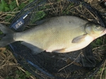 Bream Catchers Club letter